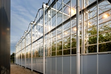 The 30th greenhouse with Rolls-Royce
